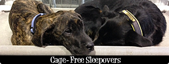 Cage Free Sleepovers & BNB Suites