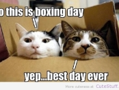 cats-on-boxing-day