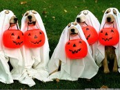 halloween-pet-wallpaper