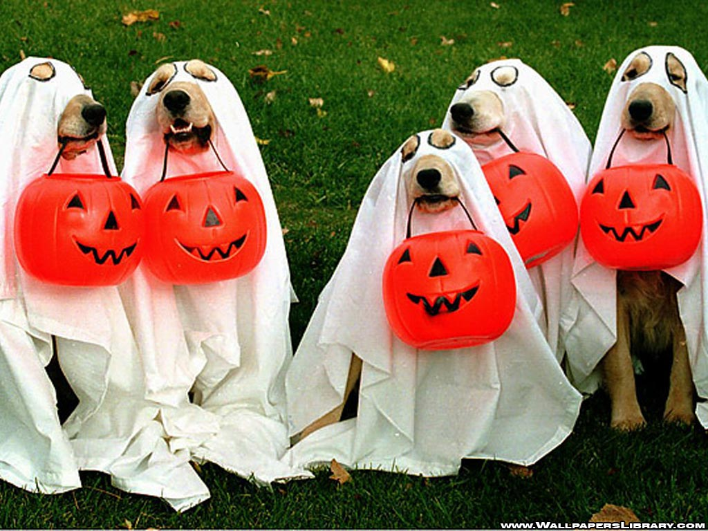 october tuesday 31st – halloween costume party! | fur the love of dogs