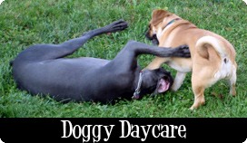 Dog Daycare