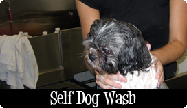 Self Dog Wash