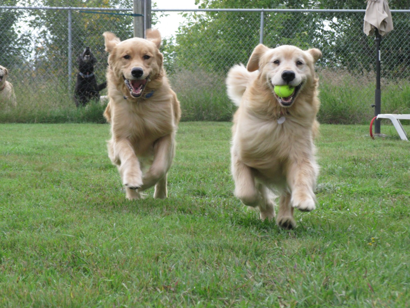 Dog Daycare Monday $20.00 In January 2019 | Fur the Love ... - photo#30